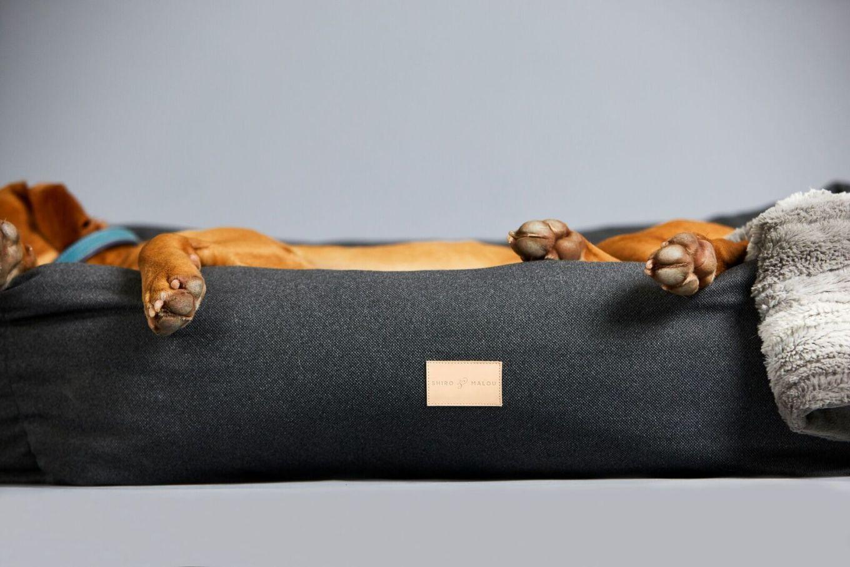 Julklappstips – till husdjuret